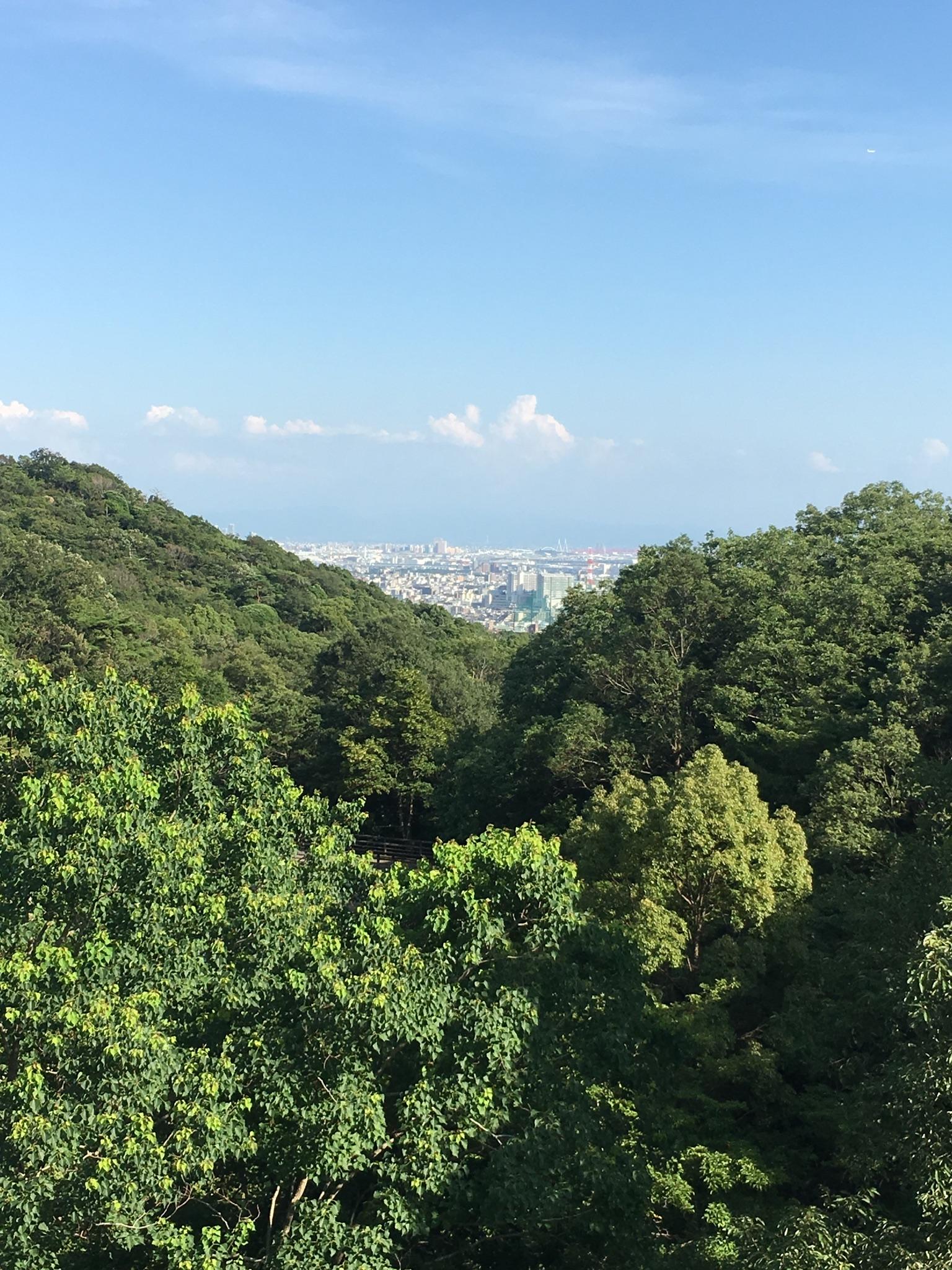 山から見た市街地