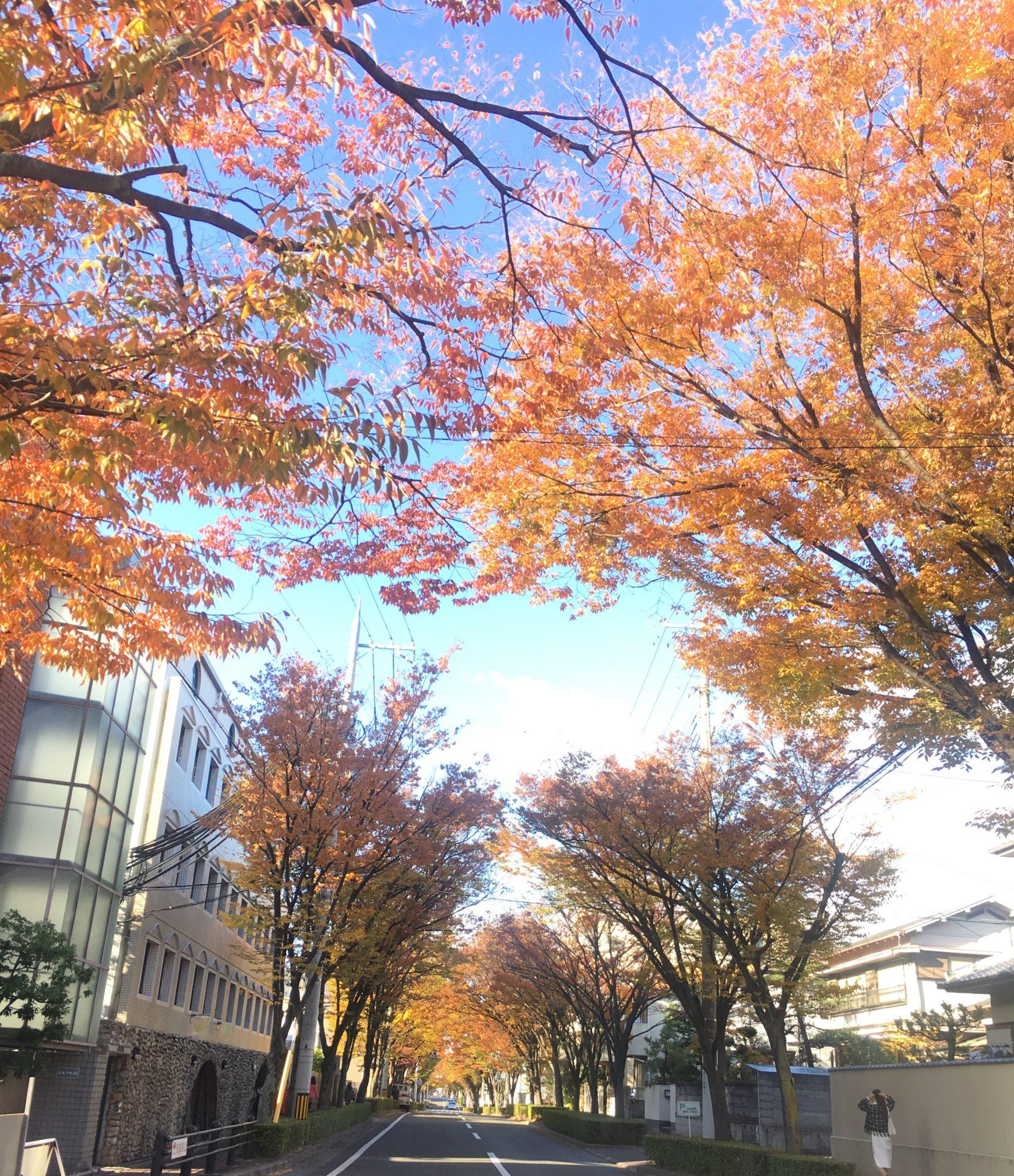 紅葉のケヤキ並木